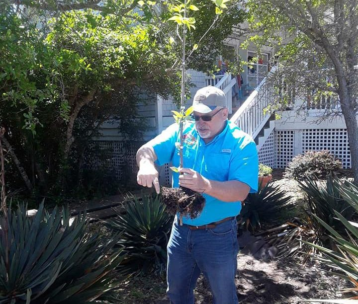 certified arborist Myrtle Beach, SC