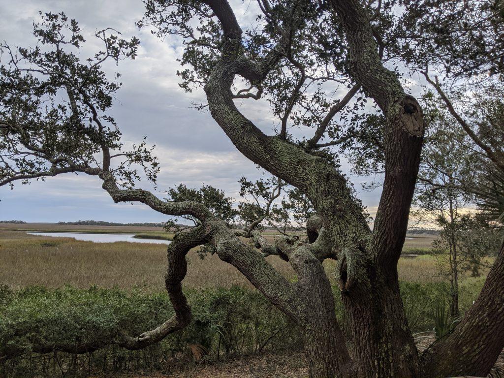 total tree care pawleys island sc
